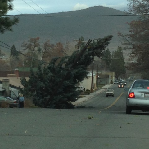 Dan's photo of a tree caught on utility lines in the 600 block of Richmond.
