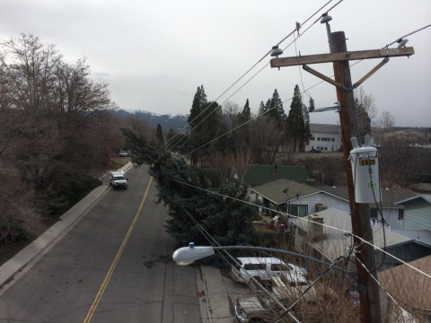 A lineman's view of a massive tree on Richmond being held up by power lines stretched to their limit.