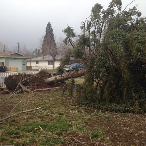 Angela sent us these photos of a tree down near McKinley School.