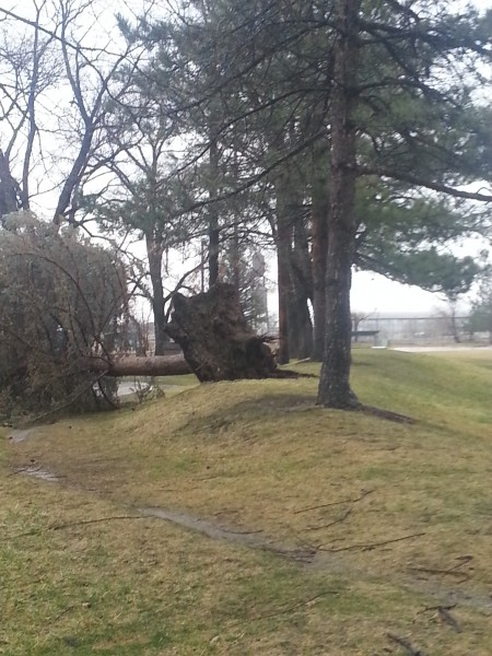 Cody sent us a photo taken shortly after this tree came down in Riverside Park.