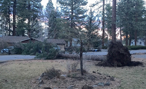 It was a close call for this house as a tree came down across Circle Drive near the golf course.  Thanks to Heather for the photo.