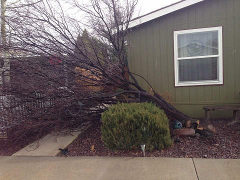 JoAnn sent us this photo of damage in a yard on Old Johnstonville Road.