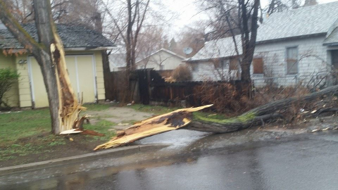 Randy sent us these storm damage photos.