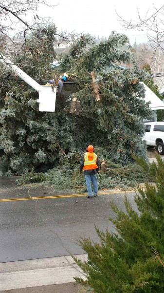 Sophie's photo of the fallen tree being removed in the 600 block of Richmond Road.