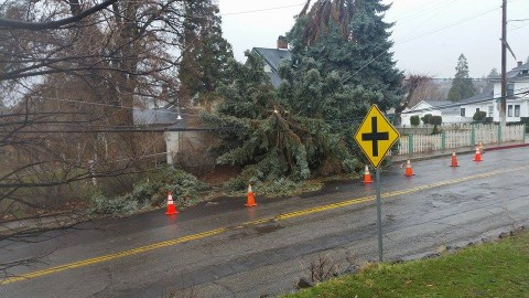 Travis's photo of the Mill Street tree.